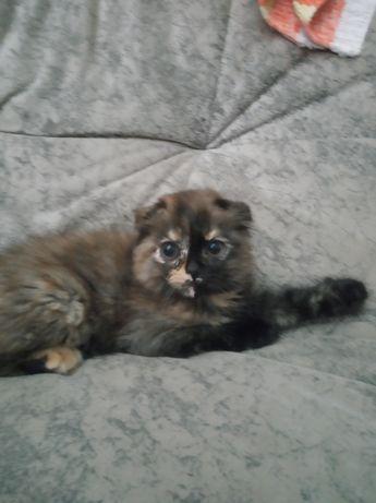 Котята от 1 до 6 месяцев