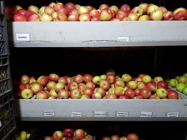 Mere bio diferite soiuri (și pere), din livadă proprie și suc de mere