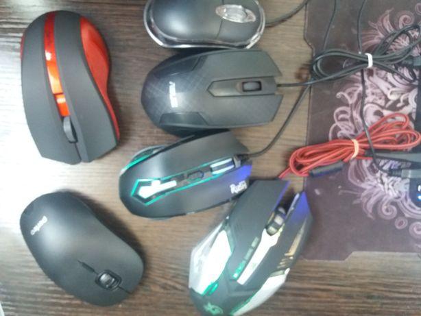 Продам    мышки.