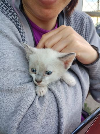 Котята приносящие удачу) в добрые руки