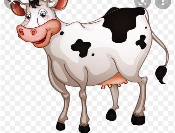 Продам корову высокоудойную