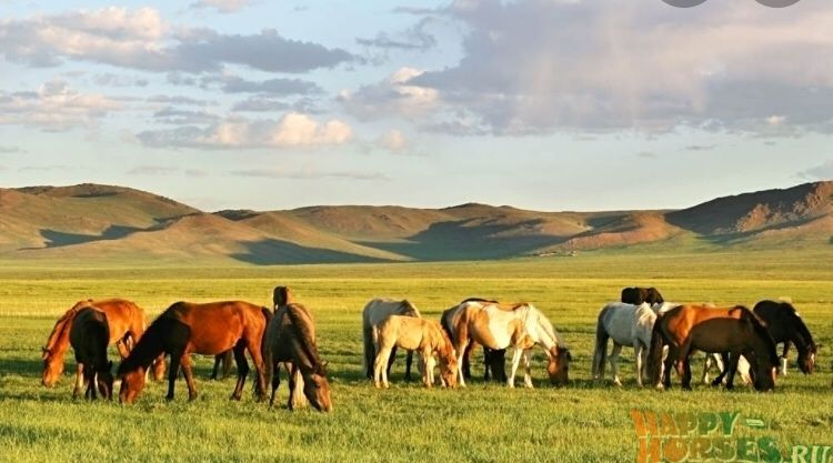 Продам лошадей оптом