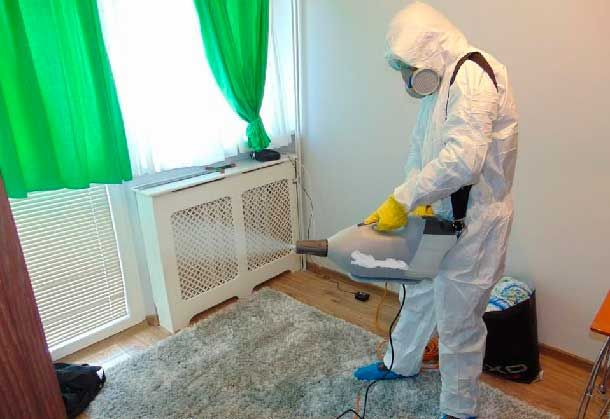 Уничтожение насекомых в г.Зыряновск от Компании DezClean