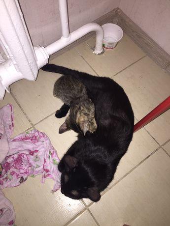 Кошка с котёнком(девочка)