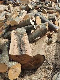 lemne de foc stejar cer frasan