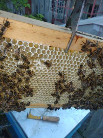 Пчелен мед с пита