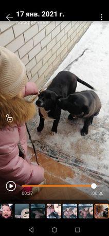 Пропали собаки по кличкам Тайсон и Рекс. Нашедшим прошу сообщить.