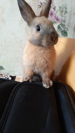 Декоротивныи кролик