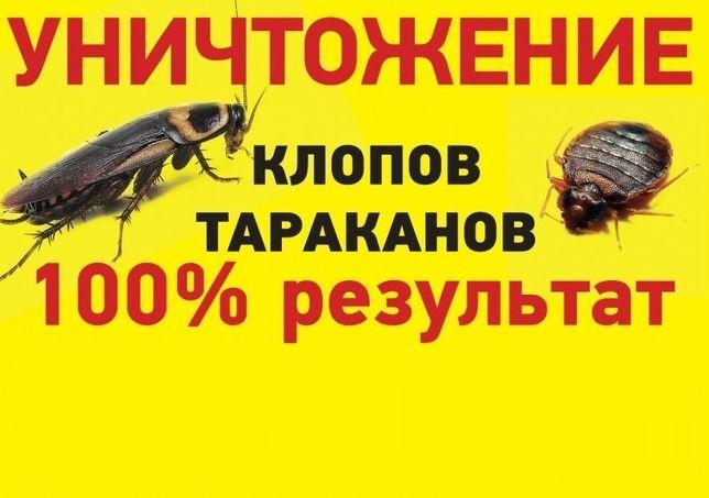 Дезинфекция муравьев,мышей,комаров,блох,крыс,клопов,тараканов,клещей!