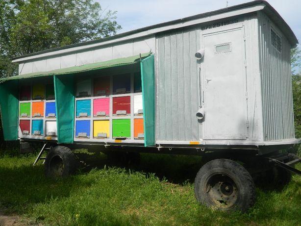 Pavilion apicol cu 48 de familii, inmatriculat
