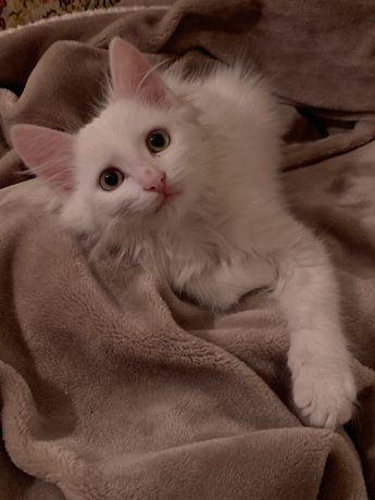 отдадим котика в хорошие добрые руки.