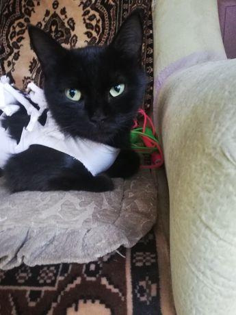 Молодой кошке нужен дом!