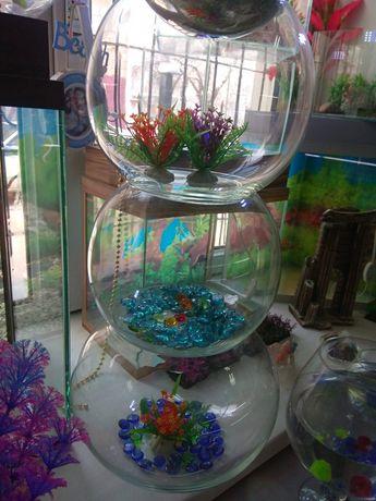 Круглый аквариум в Афалине
