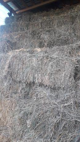 lucerna iarba  paie