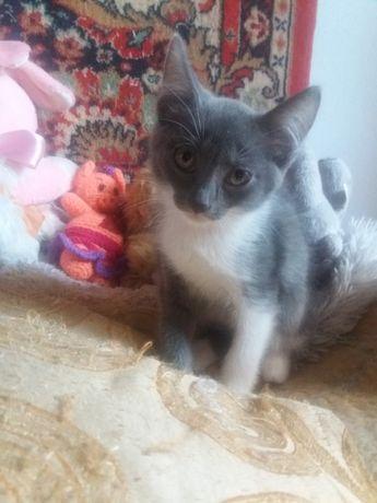 Помогите найти дом котенку ,  подкинули