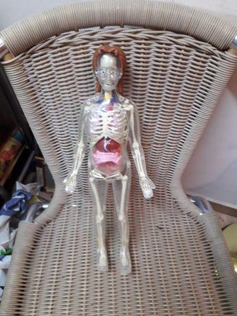 Анатомичен макет