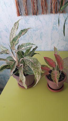 Комнатные цветы декоративные