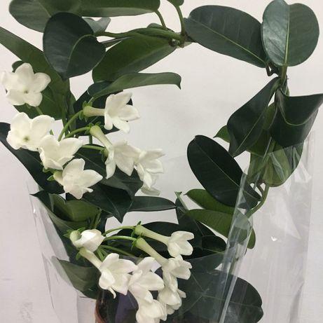 Продаю комнатные цветы и растения