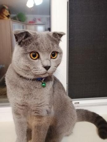 Вязка, кота,