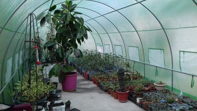 Sera de gradina sera/solar pentru legume fori