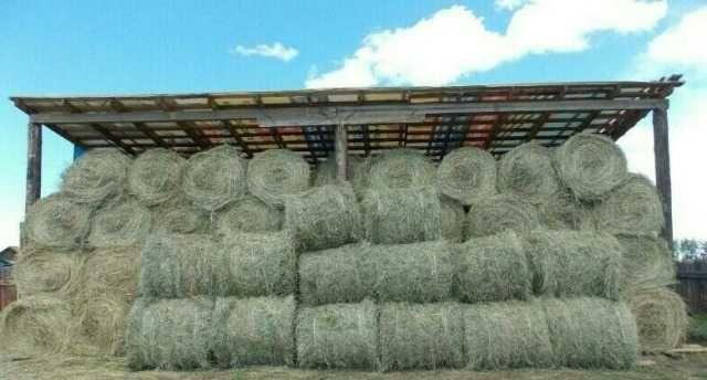 Продаю сено в рулонах!