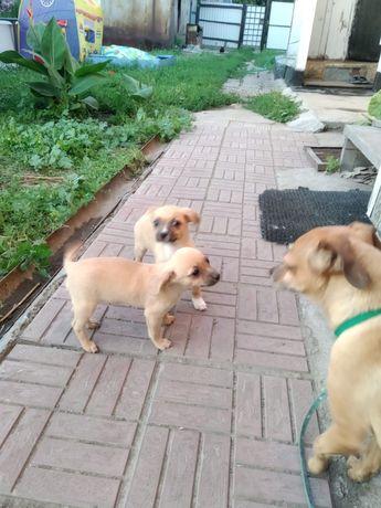 Продадим щенков