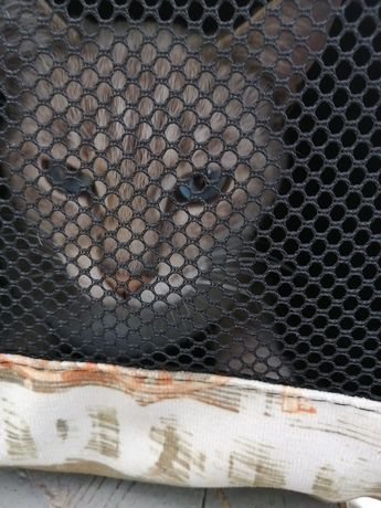Нашли кота на остановке