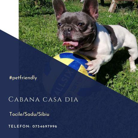 Pet friendly/Cabana Casa Dia