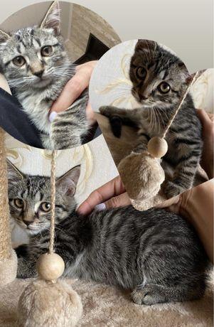 Ищим семью для котёнка )))