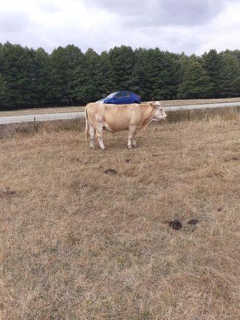 De vânzare vacă baltata