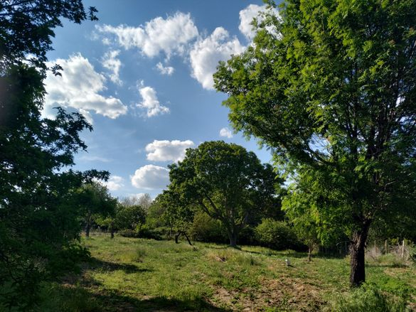 Продавам голям имот със стара къща в с. Равна гора