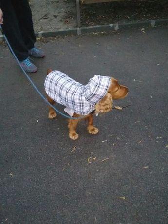 Кучешки дрешки