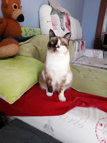 Кошечка с необычным окрасом