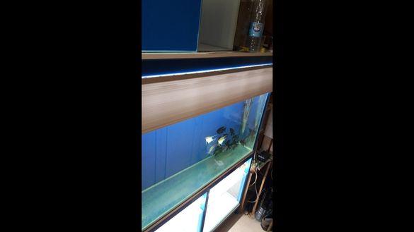 Аквариуми за декоративни рибки