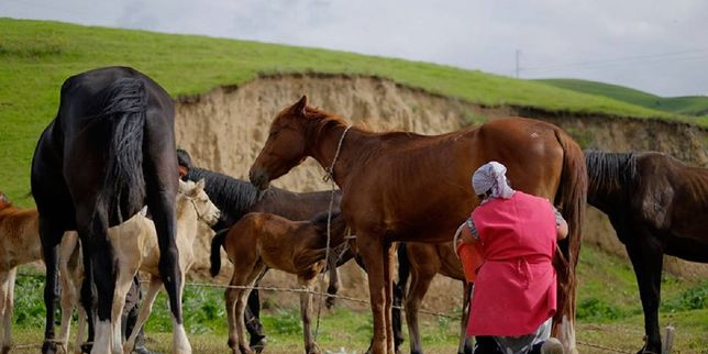 Саумал. Парное кобылье молоко 15минут от Астаны