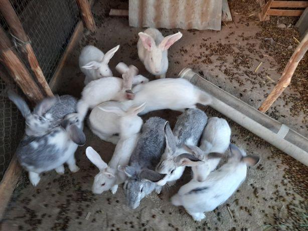 Продаю кролики всё за 20000тг 13штук