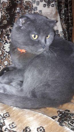 Пропала кошка серого цвета