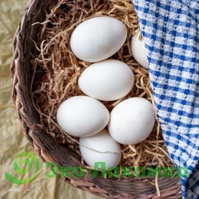 Домашние яйца куриные перепелиные свежие бодене тауык жумырткасы