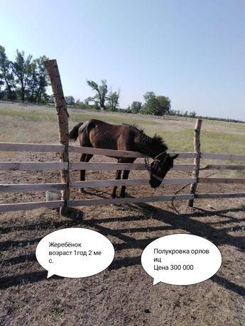 Продам скот п. Дарьинское