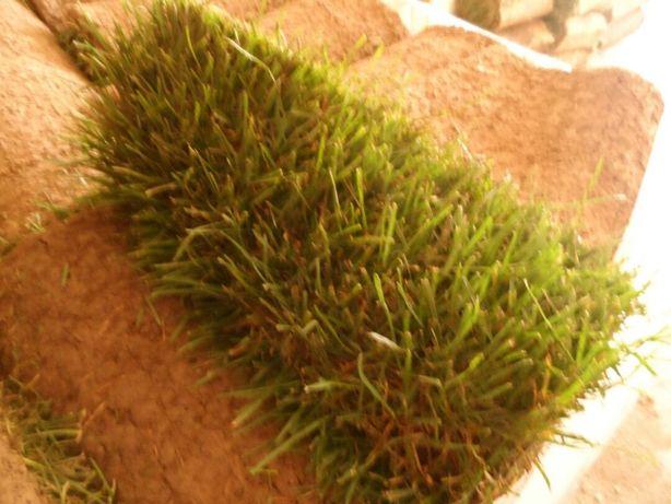 Рулонный газон ( 3 200 тг с доставкой и укладкой)