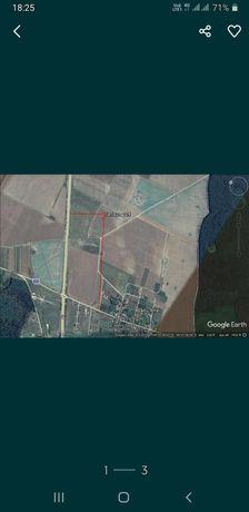 Teren construibil industrial 490mp Vadu Anei