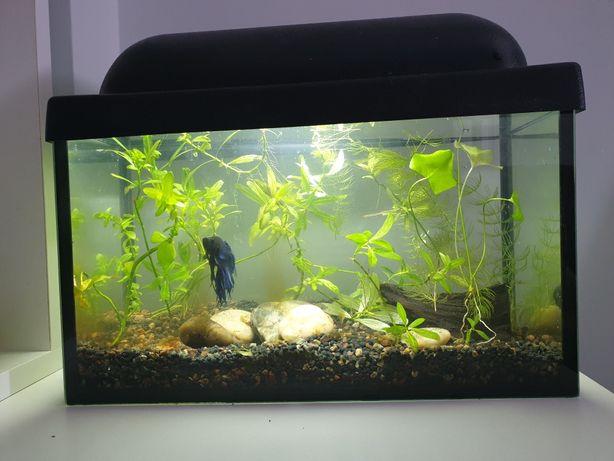 Аквариум 15 л. с растениями и 1 шт. рыбкой (петушок)