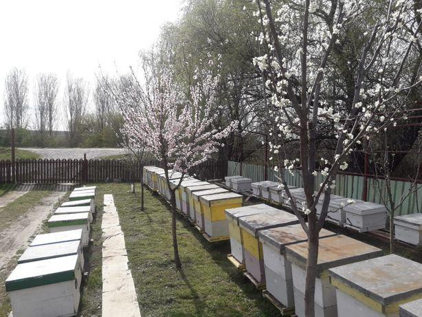 50 Stupi Familii de albine en gros plini cu miere pentru iernat