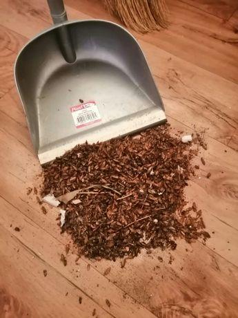 УНИЧТОЖЕНИЕ Тараканов в Астане!У Вас насекомые, У Нас РЕЗУЛЬТАТ! СЭС!