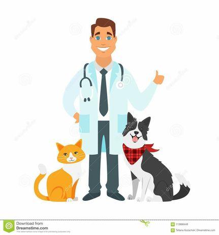 Усыпление собак  вакцинация вет услуги