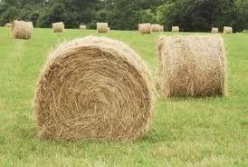 Рулонни бали сено