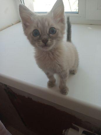 Кошечка девочка!