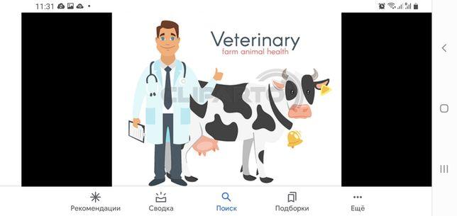 Услуги ветеринарного врача