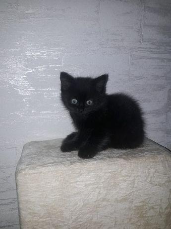 Милые умные котята