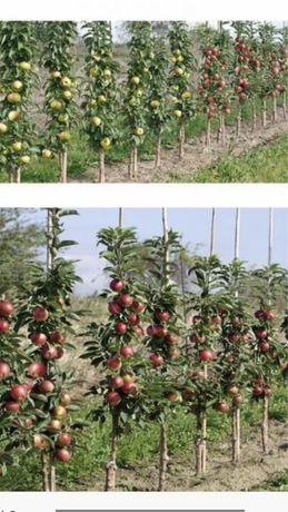 Gard viu din pomi fructiferi